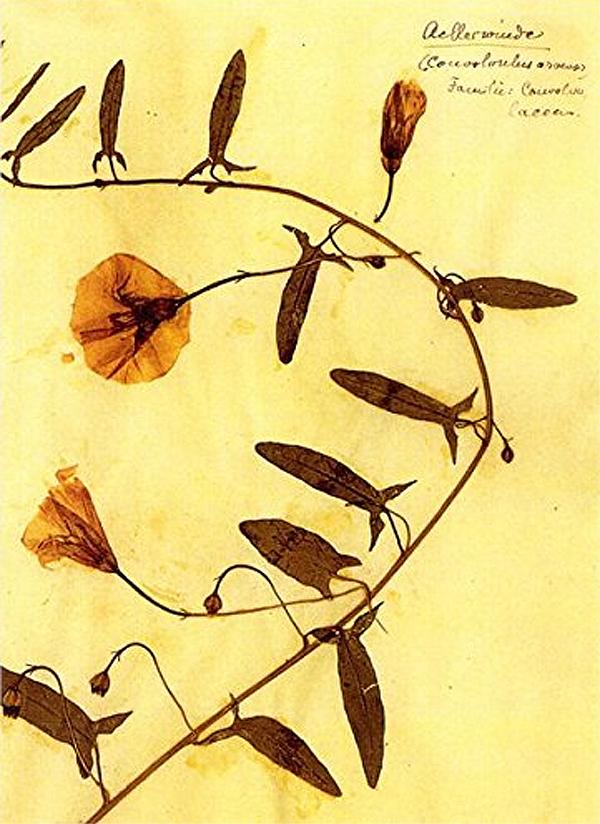 Herbário de Rosa Luxemburgo