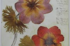 Registro do herbário que Rosa Luxemburgo montou enquanto estava presa no presídio feminino de Berlim.